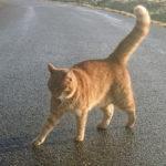 Ärlighet (och kattbilder) varar längst i sociala medier